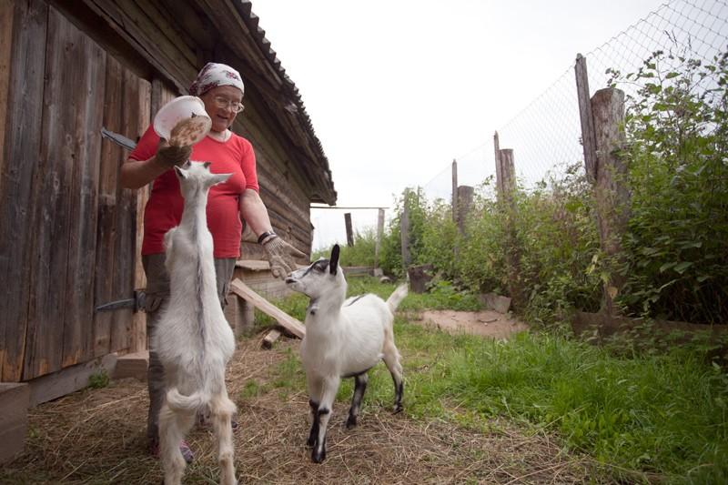 Матушка Лариса кормит коз