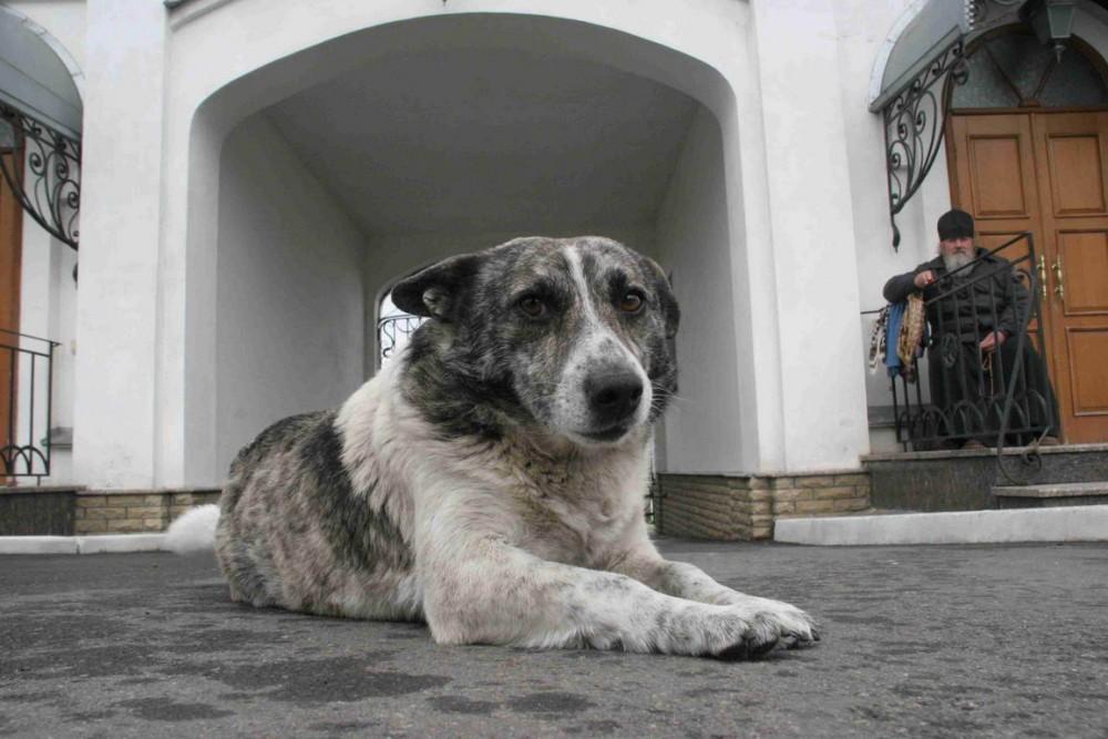 Сторожевой пёс