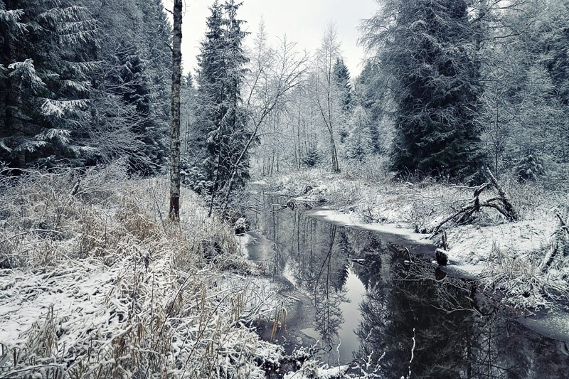 Лес у скита