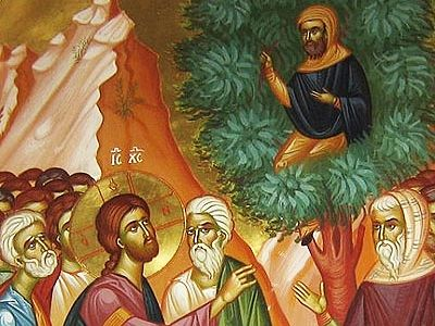 Sunday of Zacchaeus
