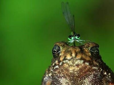 Жаба под микроскопом