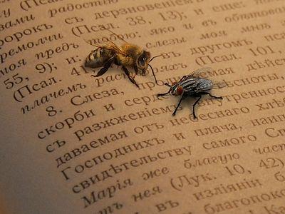 Слово для мух и слово для пчел