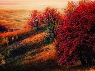 Золотая осень жизни