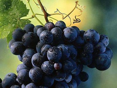 Проклятый виноградник Патаридзе