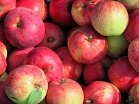 2 metric tons of blessed apples were distributed to St. Petersburg residents on the feast of Transfiguration
