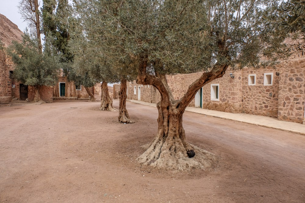Olive trees – the monastery's wealth