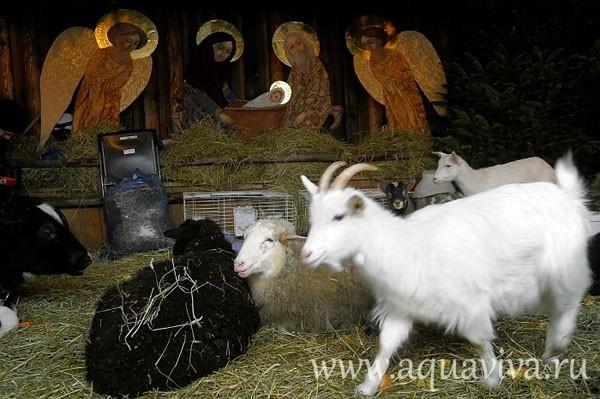 Обитатели  вертепов – овечки, козы, коровы
