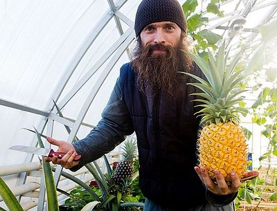 Monks of northern Russian Valaam Monastery growing pineapples