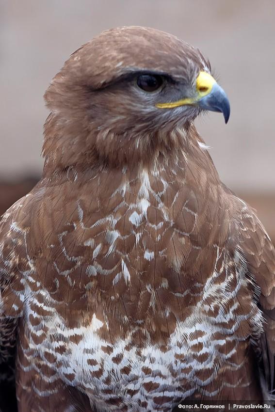 Охотничья птица